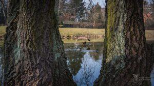 Tratwa zadaszona dla ptaków na stawie w Parku Sieleckim