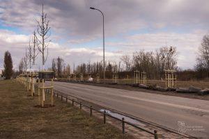Nowe drzewa przy ul. Płochocińskiej