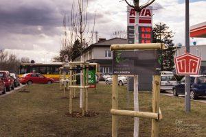 Nowe drzewa przy ul. Płochocińskiej - w sumie przybędzie tam 227 drzew