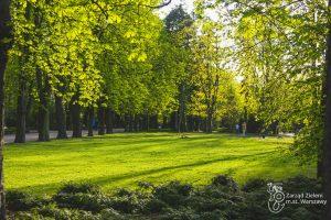Krzewy, trawnik i kasztanowce w Parku Dreszera na Mokotowie