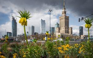 Szachownice cesarskie na rondzie Dmowskiego na tle Pałacu Kultury i Nauki