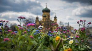 Bratki i stokrotki w konstrukcji kwiatowej przy skrzyżowaniu ul. Targowej oraz Solidarności - w tle Katedra Metropolitalna św. Marii Magdaleny przy Placu Wileńskim