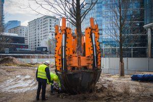 Przesadzarka drzew wyciąga z ziemi metasekwoję chińską na Placu Europejskim