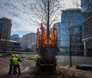 Ciężarówka z przesadzarką drzew wywozi metasekwoję chińską z Placu Europejskiego