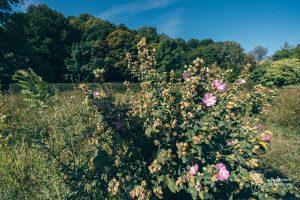 Łąka kwietna w Parku Kazimierzowskim