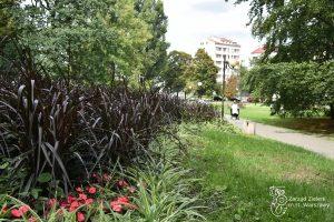 Kwietnik w Parku Kazimierzowskim - w tle kobieta i dziecko w wózku
