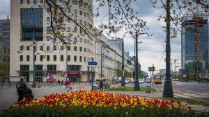 Żółte i czerwone tulipany na skrzyżowaniu ul. Marszałkowskiej i Królewskiej
