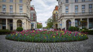 Tulipany w okrągłym kwietniku na Placu Zbawiciela