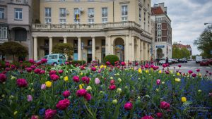 Wielobarwne tulipany na Placu Zbawiciela