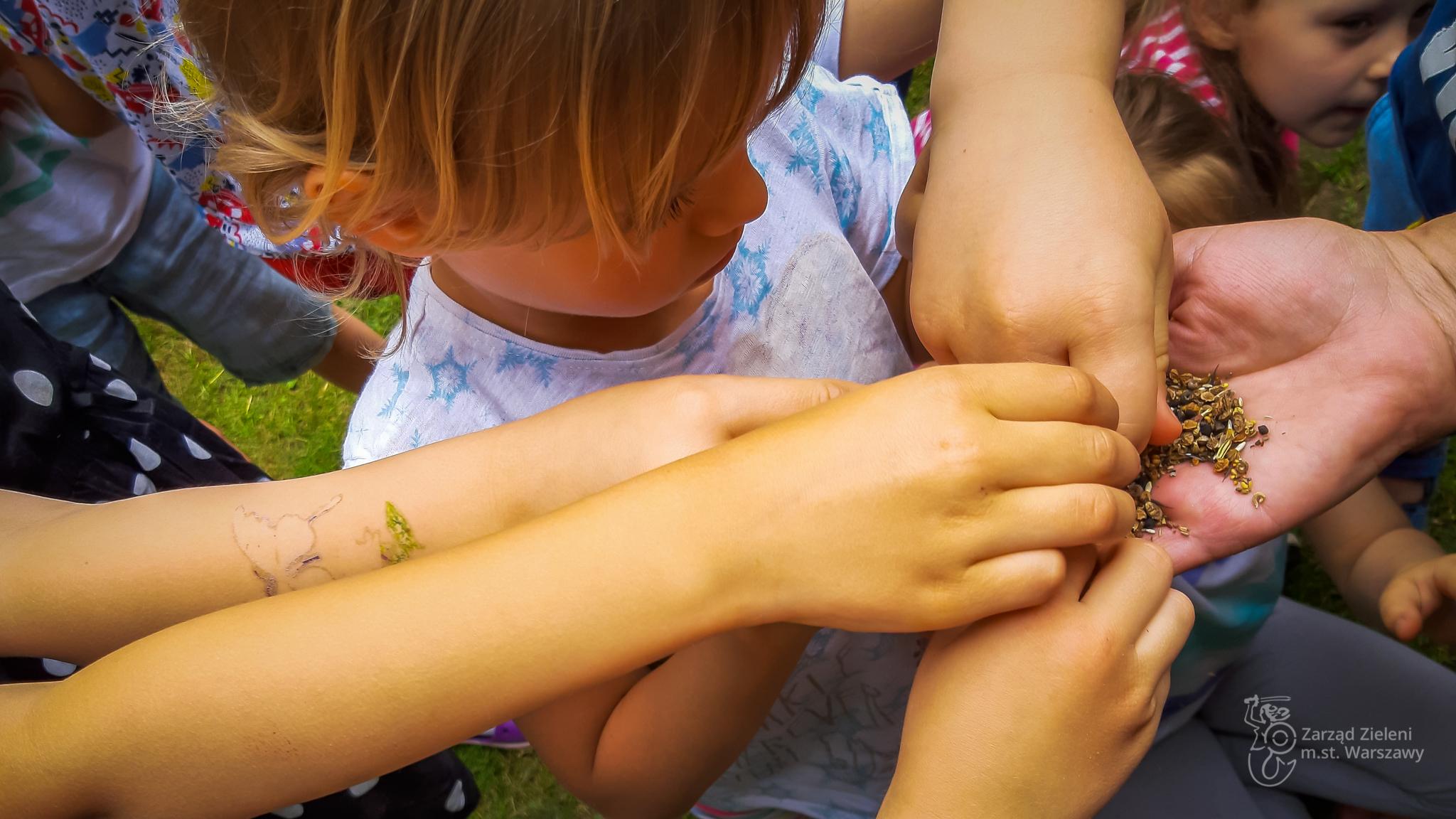 Dziecko bierze z ręki animatorki nasiona łąki kwietnej