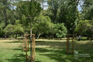 Nowe nasadzenia drzew w Parku Praskim