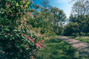 Krzewy w Parku Praskim