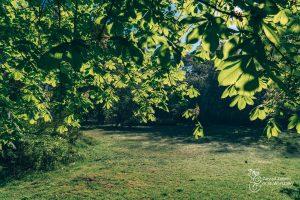 Zielona polana i liście drzew w Parku Praskim